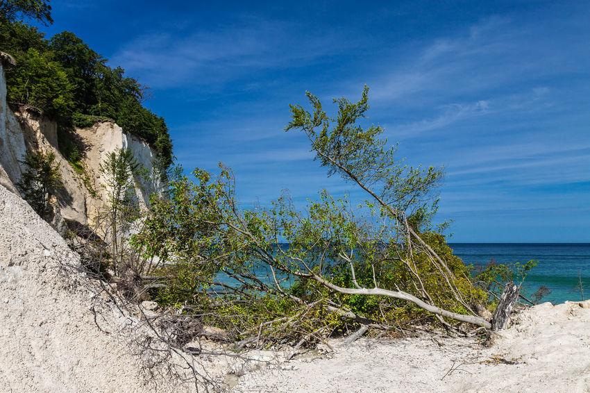 Baltic Sea coast on the island Ruegen, Germany. Baltic Sea Beach Blue Chalk Cliffs Coast Day Nature No People Outdoors Rügen Sand Sea Shore Sky Trees Water White Cliffs