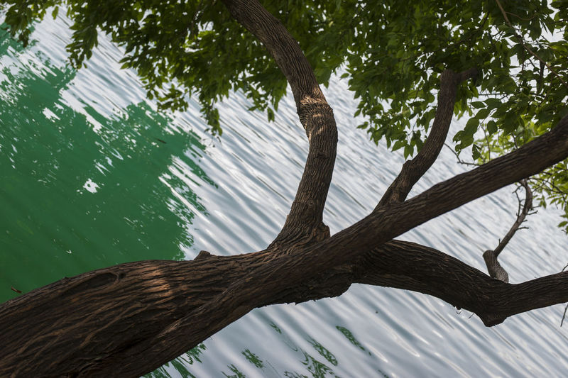 Low angle view of tree by lake