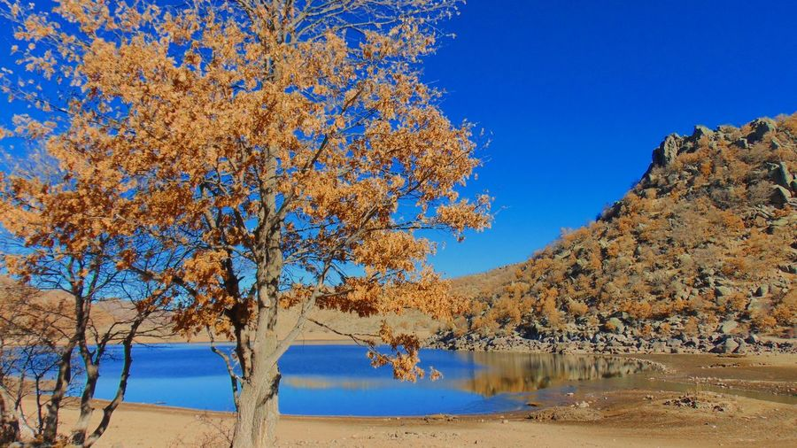 Tree By Lake Against Clear Blue Sky