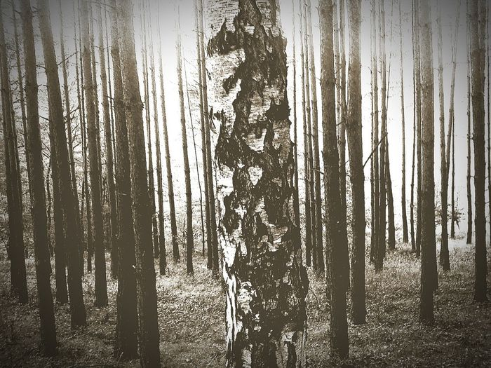 Lonely Forest Trees And Sky Trees Wood Loneliness Difference  EyeEm Diversity Break The Mold Conformism
