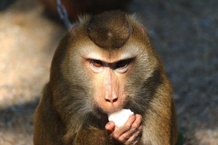 Monkey Monkey Eating Jungle Animal Monkey EyeEm Selects