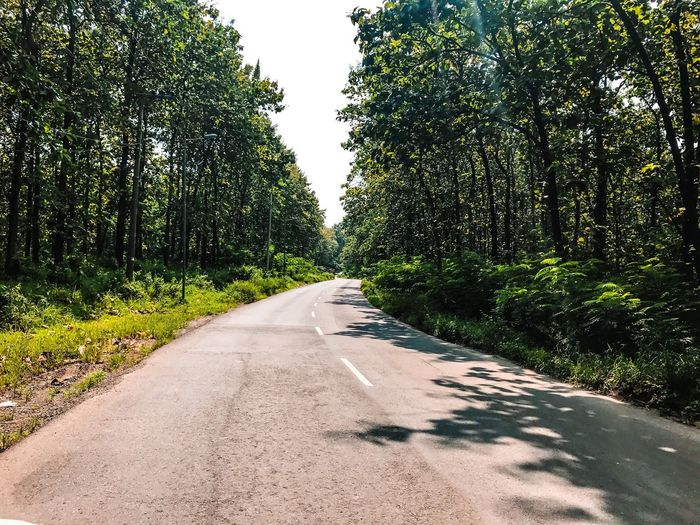 Teak Forest.. Tree Road Nature Green Color No People Clear Photo Nature