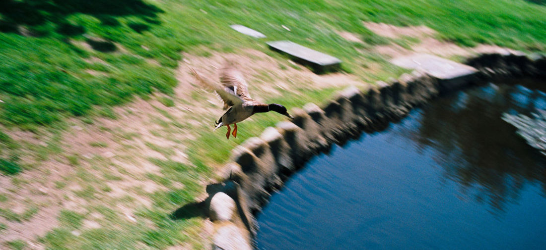 Blurred motion of bird flying over water