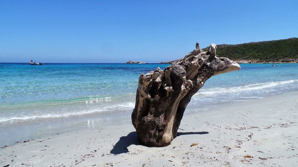 Beach Beauty In Nature Blue Driftwood Fine Art Photography Horizon Over Water Idyllic Nature On The Beach On The Way Sea Showcase: July Sky Summer Summer Views Tranquility Water Costa Smeralda My Favorite Place