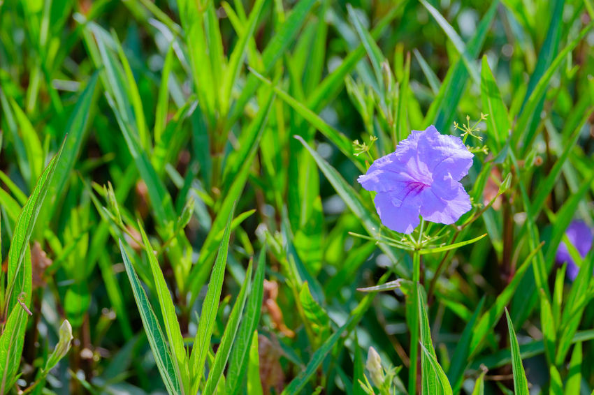 Beauty In Nature Blooming Close-up Day Flower Flower Head Fragility Freshness Grass Green Color Growth Leaf Nature No People Outdoors Petal Plant