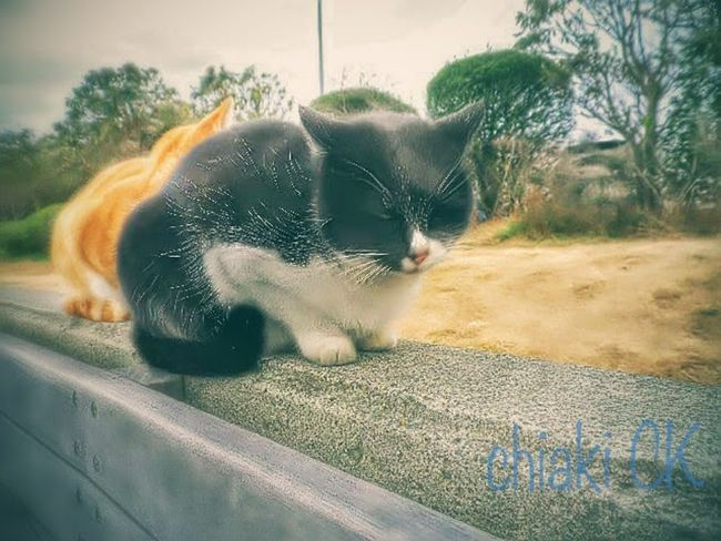 Cat Cute Cat Cute Cat.  Cute Cats Stray Cat