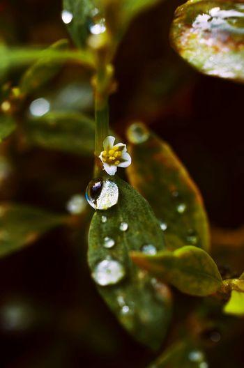 Photography Photo Photographer Macro Photography Macro_collection Macro Beauty Macro Nature Nature Photography Nature_collection Nature Colorful Nikon D5100  Nikon Naturephotography Macro_flower Flower Morning