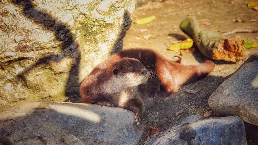 Animal Wildlife Animals In The Wild Mammal Animal Themes Outdoors No People Day Nature Monkey Sitting Food Close-up Fischotter