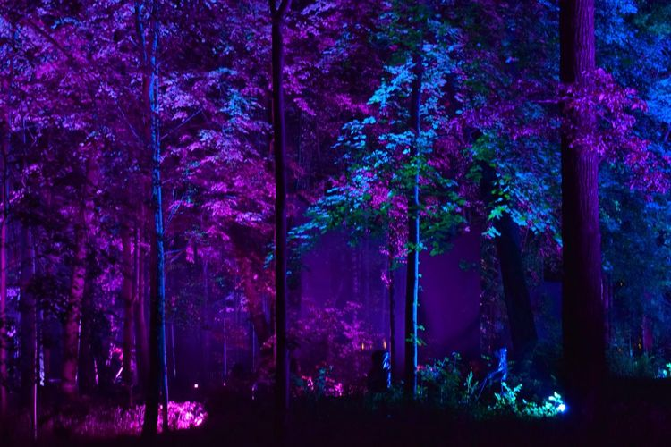 ✨ Inspiration Art Festival ✨ Tree Night Growth Nature Beauty In Nature Purple Tree Trunk No People Outdoors Scenics Art Is Everywhere Illuminated Neon Life Park Night Lights Light Effect Bright Art Event Arts Culture And Entertainment Art Festival Night Photography Nightphotography Trees Enchanted Forest