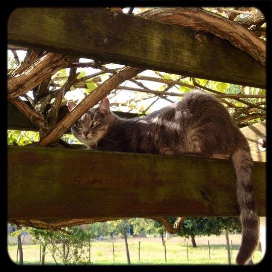 My Cat Enjoying Life Garden Relaxing