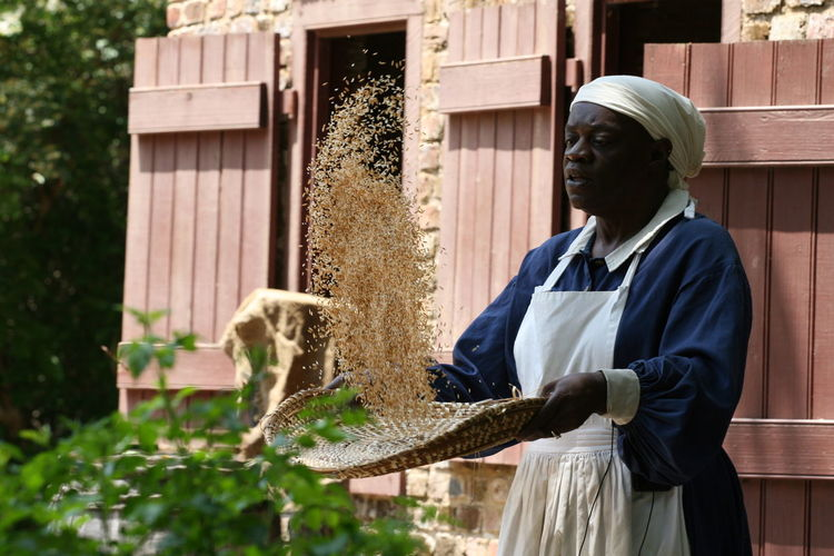 Concentration Gullah Mature Adult One Person Plantation Rice Sifting Skill