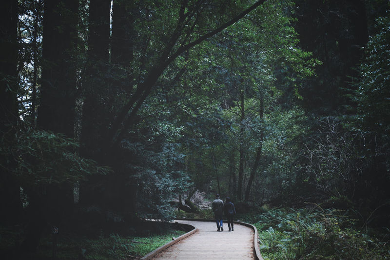 Rear view of couple walking on footpath amidst trees