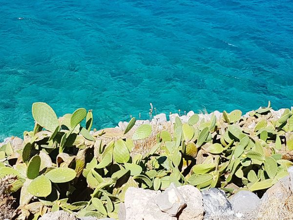 Cactus Water Sea High Angle View Plant Nature Growth Tranquil Scene Beauty In Nature Crete Greece Spinalonga Island No People Nature Tranquility Sunlight