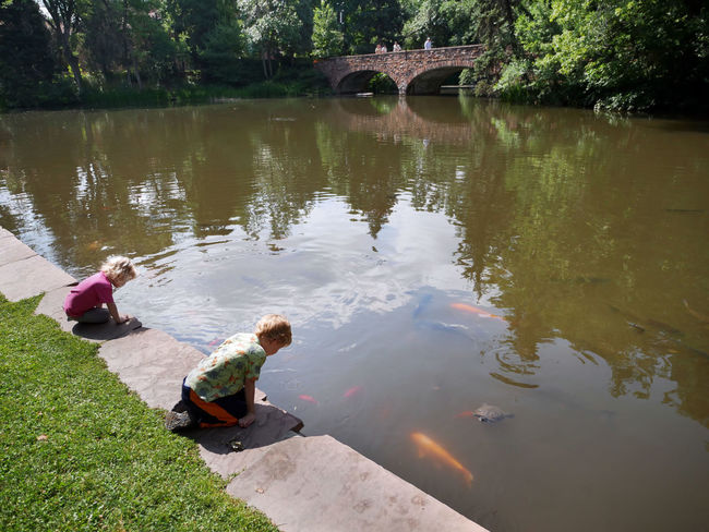 Children watch koi and turtles jockey for food. Beauty In Nature Childhood Curiosity Green Color Koi Fish Lake Leisure Activity Nature Norman Rockwell Inspired Nostalgia Outdoors Reflection Relaxation Showcase July Sitting Tranquil Scene Tranquility Tree Turtles Water Hidden Gems  Enjoy The New Normal The New Normal
