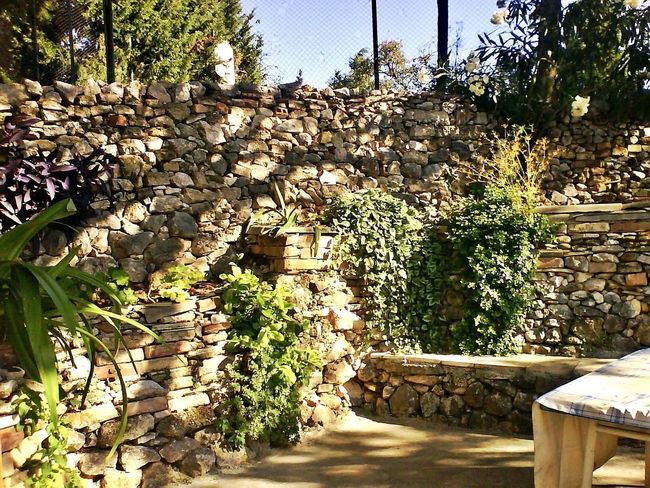 Stones and plants Nature Plant Tree Flower No People Beauty In Nature Outdoors Freshness Day Stones Stones And Plants