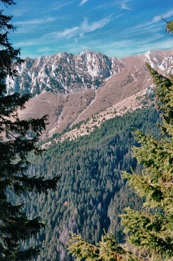 Aerial view of pine trees and mountains against sky