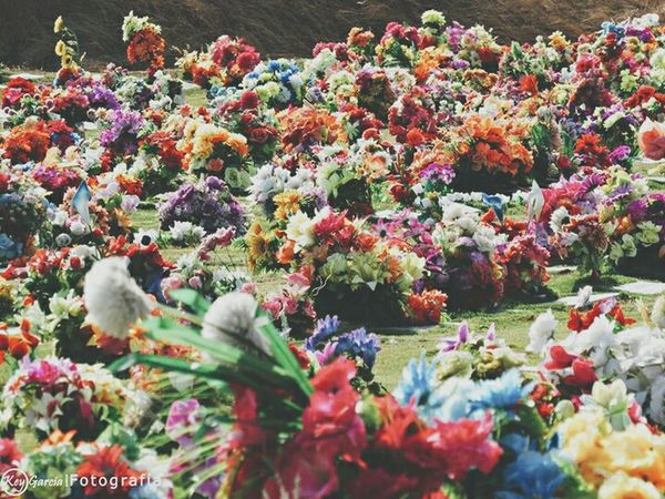 Hello World Popular Photos Eye4photography  Vscocam Cementery Cementerio Vintage Flores Photography Muerte