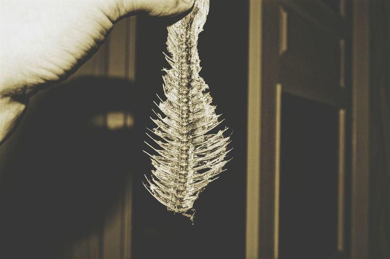 Cropped Image Of Person Holding Fish Skeleton