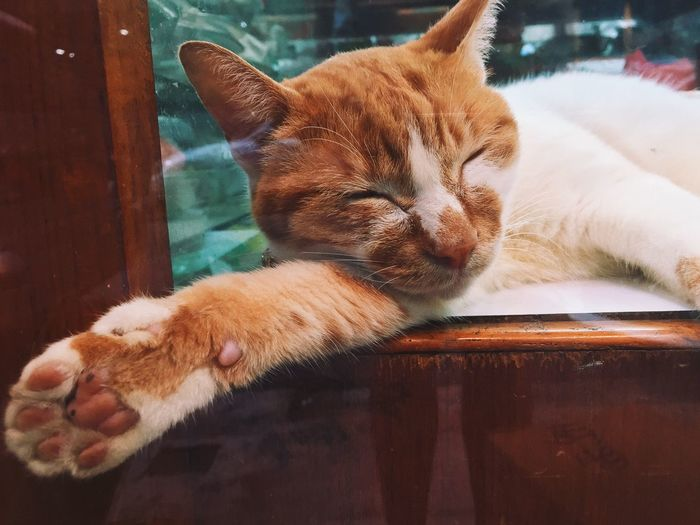 Let paw free Eye Cat Feline Cat Lovers Catportrait 猫 Snapcat Cats Of EyeEm Eyes Catareeverywhere Sleeping Sleeping Cats