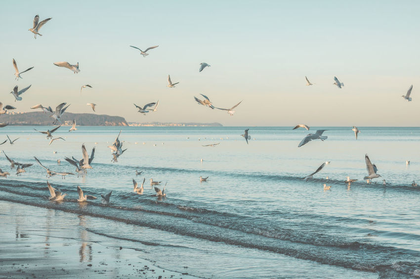 Beach Beach Photography Blue Sky Earth Edit Flock Of Birds Freedom Horizon Over Water M Mid Air Moments Ocean Peace Quiet Reflection Relaxing Sea Seagull Seagulls Sun Tranquility Vintage Water Wave Waves
