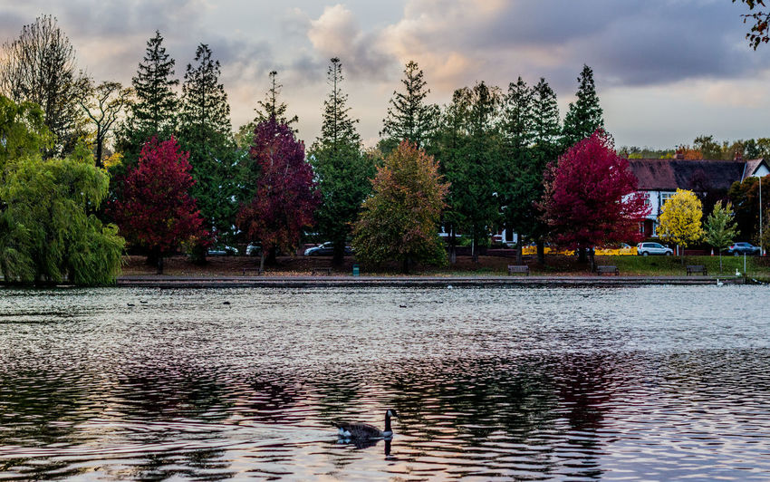 Contrast... Autumn Autumn 2015 Autumn Collection Autumn Colors Autumn Leaves Autumnbeauty Beautiful Autumn Beauty In Nature Beauty In Nature Colors Day Eye4photography  Horizontal Lake Lake View Landscape Landscape_photography Nature Outdoors Photography Reflection Reflections In The Water Sky Tree Water