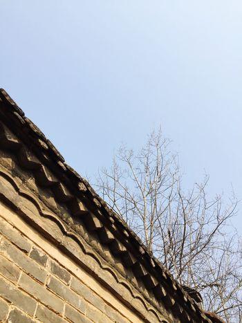 Sky Branch Roof