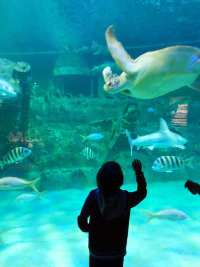 Water Animal Themes Animal Wildlife Animals In The Wild Sea Animal Fish Underwater Animals In Captivity Aquarium Sea Life Marine Tank