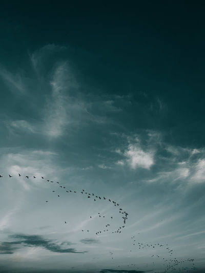 Moody sky group of birds flying above clouds