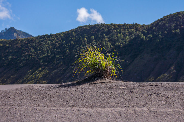 Plant On Roadside Against Mountain