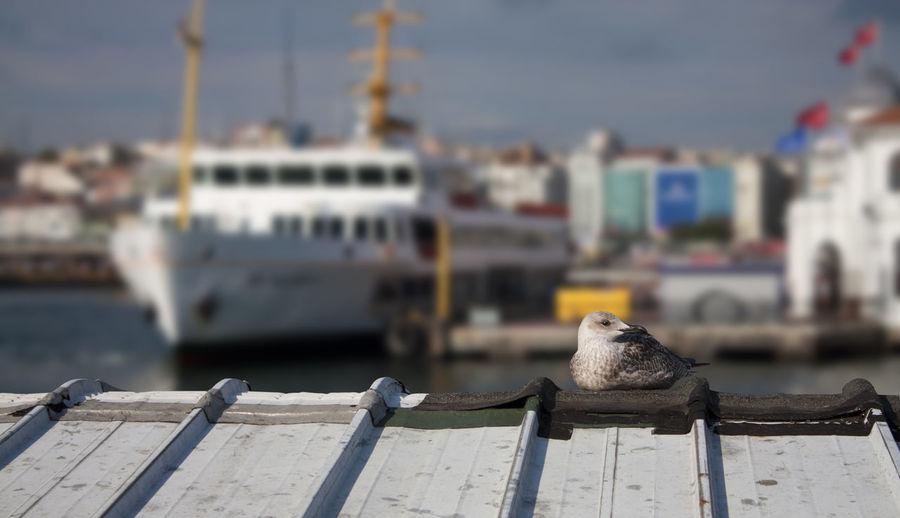 Bird perching on a pier