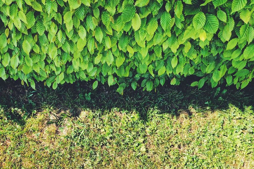 Green Color Plant Growth Nature Day Leaf Plant Part No People High Angle View Beauty In Nature Outdoors Land Grass Field Freshness Full Frame Close-up Tranquility Lush Foliage Foliage
