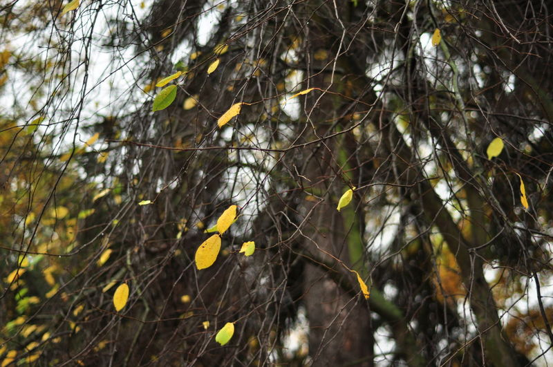 Beauty In Nature Close-up Day Focus On Foreground Forest Fragility Green Green Color Leaf Leaves Natural Pattern Nature No People Outdoors Plant Selective Focus Tranquil Scene Tranquility Tree Tree Trunk Twig WoodLand Yellow