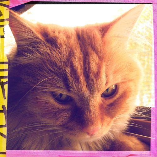 Our Gato