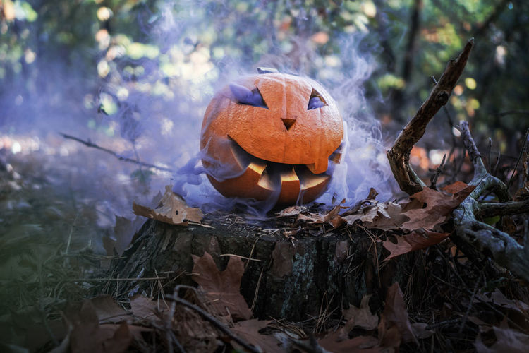 Smoke emitting from jack o lantern in forest