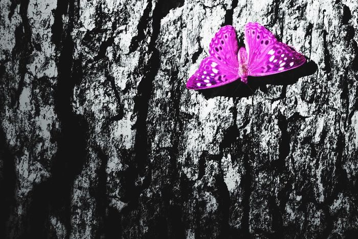 I'm a man and throughout my years I've seen many women work hard if not harder than many men. I stand for equality. GenderEquality Texture Butterfly Pink
