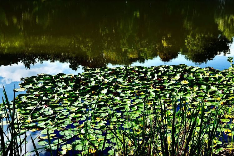 Reflection of plants in calm lake