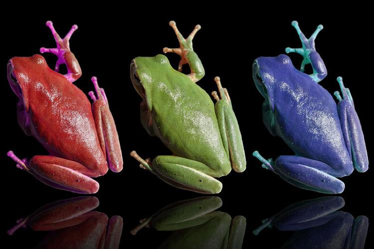 Frog Animals No People Colors ArtWork Photoshop Decoration FUNNY ANIMALS