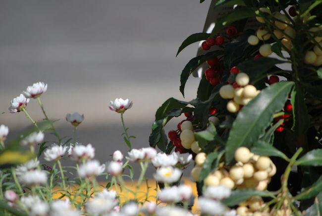 東京の道端で密かに咲いてる… 🌼 Quietly blooming by the roadside near my workplace..。| Nighty Night from JST!😪💤| 道端の花。 道端の植物 Goodnight ♡ By The Roadside By The End Of The Day 小さな幸せ Seeking BEAUTY ♡ Seeking The Spring ちいさな春 Beauty In Nature From My Perspective Mynikonlife Nikon Photography NoEditNoFilter Full Frame EyeEm Gallery EyeEmNewHere EyeEm Flower Unedited Flowers, Nature And Beauty Flowers,Plants & Garden おやすみなさい✨