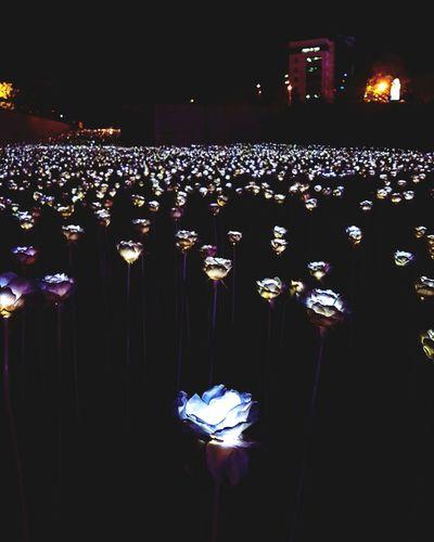 Dongdaemun DDP Light Lightflowers Dongdaemun Dongdaemun Design Plaza Dongdaemun Ddp Ledflowers LED Nightview Night Friend Korea Korean Follow Seoul Beautifulview View Illuminated Nightlife Arts Culture And Entertainment Popular Music Concert Lighting Equipment Electric Light Lamp