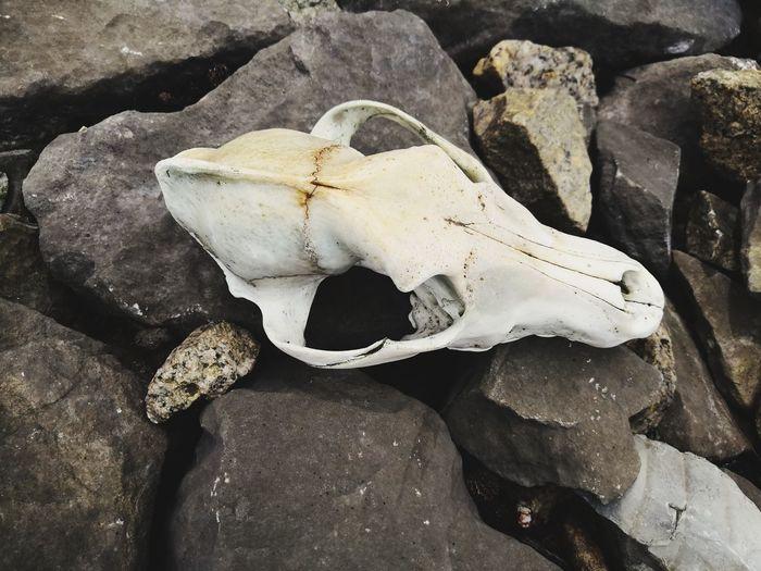 High angle view of animal skull on rock