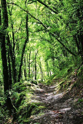 Chemin Forestier Foret Arbres Trees Forest In The Forest Nature Photography Nature