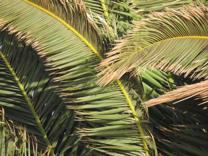 Palm Tree Nature No People Tui Magic Life Power In Nature Outdoors Beauty In Nature Vacations Beautiful View Full Of Life Fullscreen