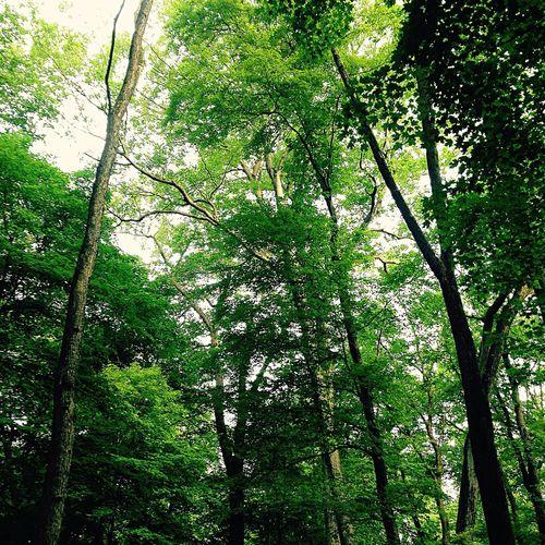 Deep roots Trail Running