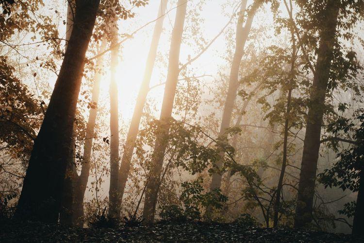 туман рассвет Природа WoodLand Nature ижевск Russia VSCO Осень 🍁🍂