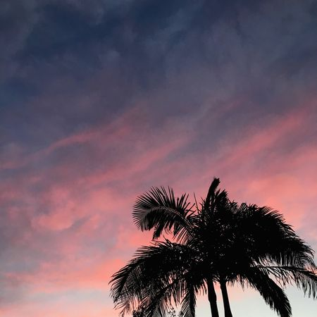 Palm Tree Silhouette Sunset Low Angle View Scenics Tree Tranquil Scene Sky Tranquility Beauty In Nature Majestic Nature Growth Atmosphere Idyllic Cloud Atmospheric Mood Orange Color Outdoors Palm Frond Pink Sky Magic Moments Magic Hour