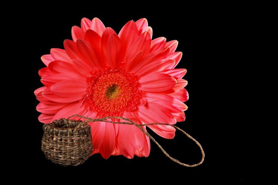 Tiny baskets Australia Black Background Basket Weavin No People Studio Lighting Traditional Aboriginal Culture With Flower