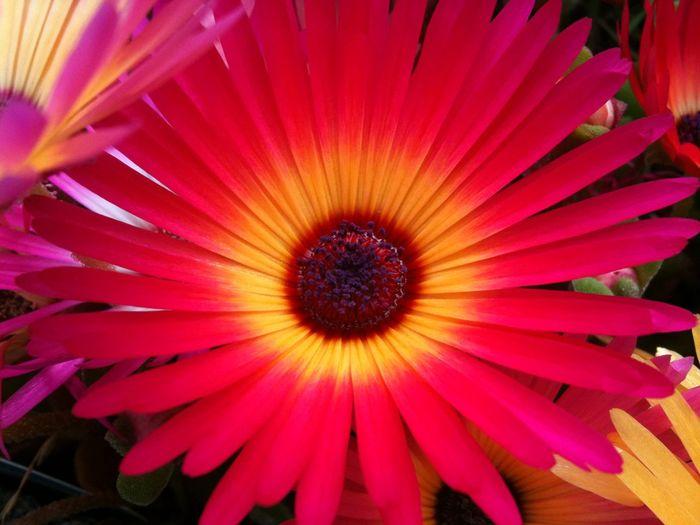 Flowers Single
