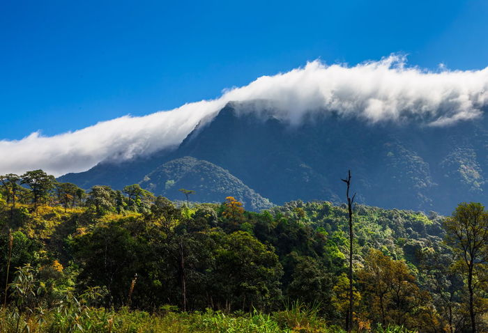 The mountain is covered with fog Cloud Field Pine Tree Beauty In Nature Day Fog Forest Landscape Meadow Mist Mountain Mountain Range Nature No People Outdoors Scenics Sky Tranquil Scene Tranquility Tree