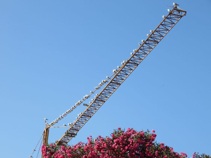 Low Angle View Of Birds Perching Crane Against Clear Sky