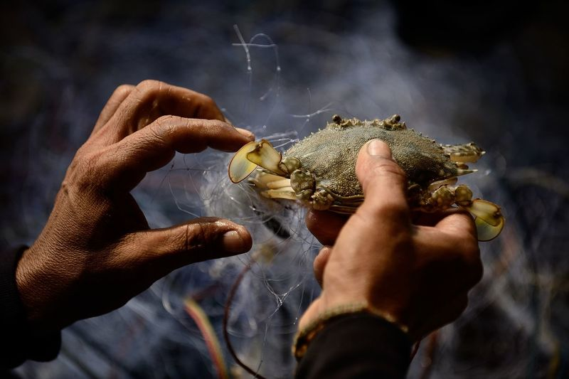 Cropped image of man holding crab